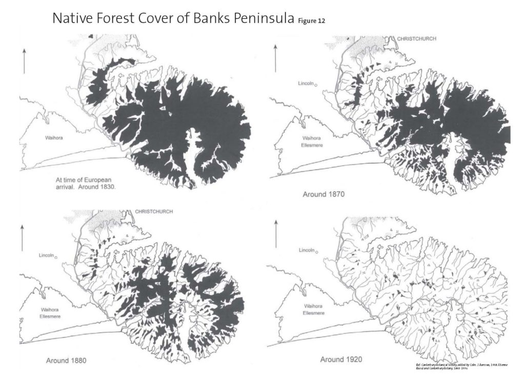 Native Forest Cover of Banks Peninsula